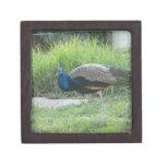 Peacock Premium Gift Box