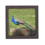 Peacock Premium Jewelry Boxes