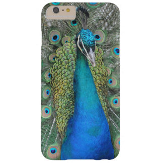 Peacock Pride Barely There iPhone 6 Plus Case