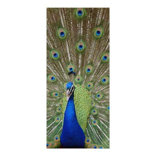 Peacock Rack Cards