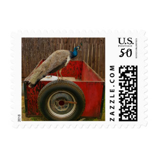 PEACOCK RESTING ON OLD RED TRAILER POSTAGE