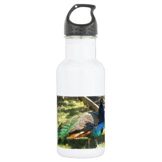 Peacock Reusable Bottle