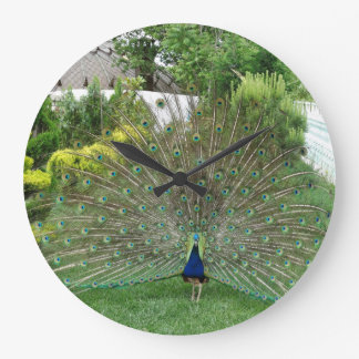Peacock Round (Large) Wall Clock