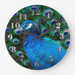 Peacock Round Wall Clock Large