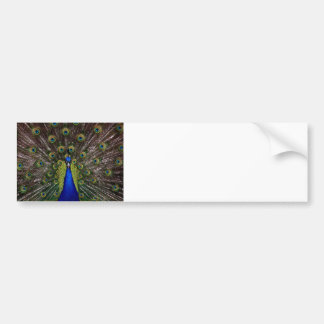 Peacock Royal Blue Gifts Presents Beautiful Bumper Sticker