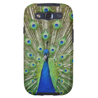 Peacock showing its feathers, as part of a samsung galaxy s3 cases