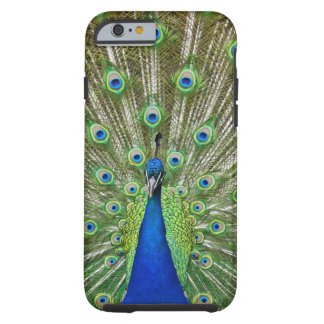 Peacock showing its feathers, as part of a tough iPhone 6 case