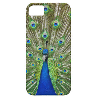 Peacock showing its feathers, as part of a iPhone 5 cover