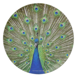 Peacock showing its feathers, as part of a melamine plate