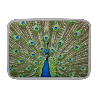 Peacock showing its feathers MacBook sleeves