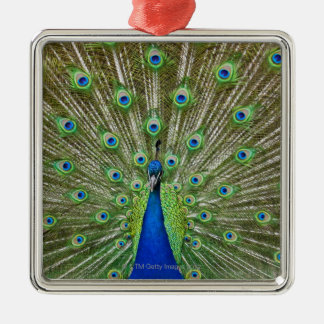 Peacock showing its feathers metal ornament