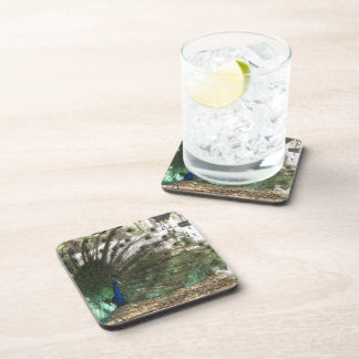 Peacock Showoff Beverage Coaster