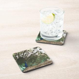 Peacock Showoff Beverage Coaster