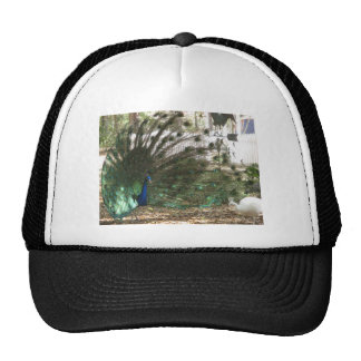 Peacock Showoff Hat