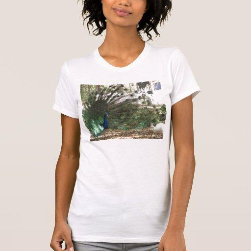 Peacock Showoff T-Shirt