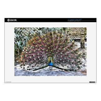 Peacock Laptop Decals