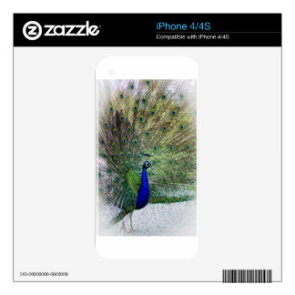 Peacock Skins For The iPhone 4