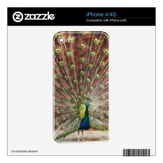 Peacock Skins For iPhone 4S
