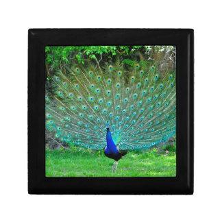 Peacock Slight Gift Box