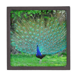 Peacock Slight Jewelry Box