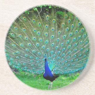 Peacock Slight Sandstone Coaster