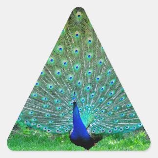 Peacock Slight Triangle Sticker