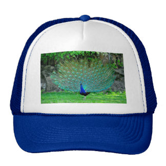 Peacock Slight Trucker Hat