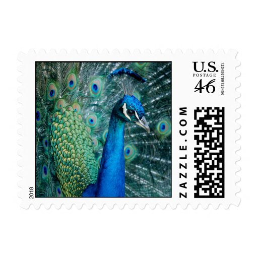 Peacock, small stamps