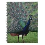 Peacock Spiral Notebooks