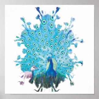 Peacock spirit poster