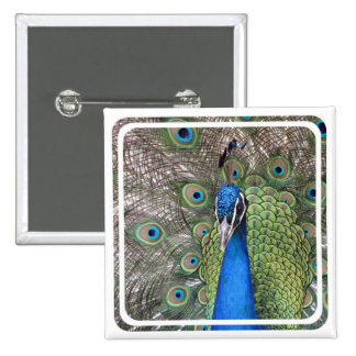 Peacock Square Pin