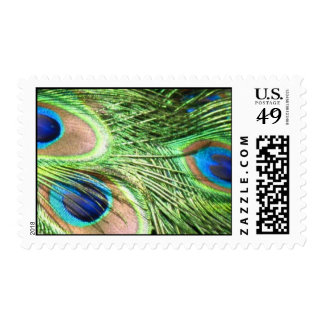 PEACOCK STAMP POSTAGE