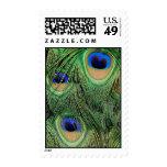 Peacock Stamp V