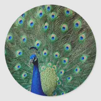 Peacock, stickers