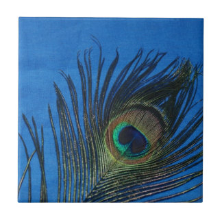 Peacock Still Life with Blue Tile