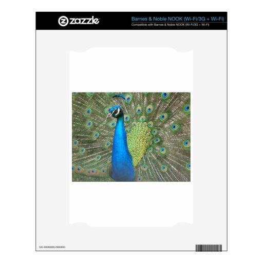 Peacock Strut 2 NOOK Skin