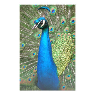 Peacock Strut 2 Stationery