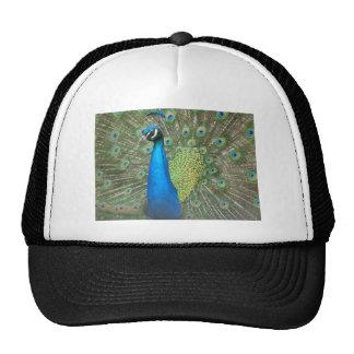 Peacock Strut 2 Trucker Hat