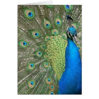 Peacock Strut Card
