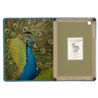 Peacock strutting iPad mini retina case