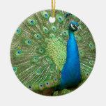 Peacock Strutting His Stuff Christmas Ornaments