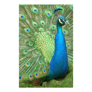 Peacock Strutting His Stuff Stationery