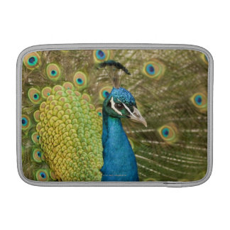 Peacock strutting sleeves for MacBook air