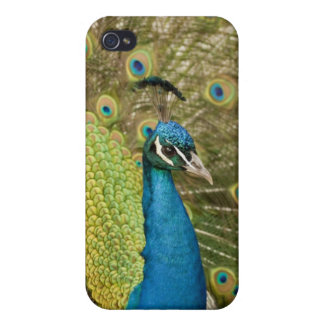 Peacock strutting iPhone 4/4S cases
