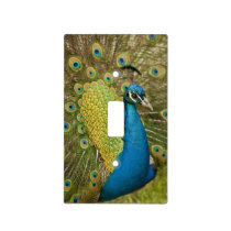 Peacock strutting light switch cover