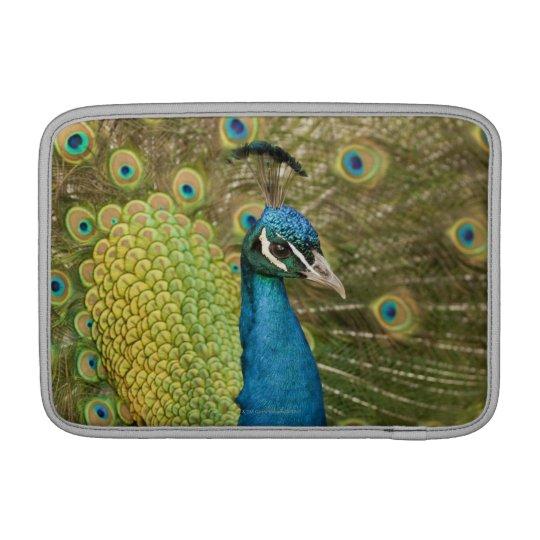 Peacock strutting MacBook sleeve