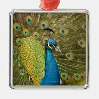 Peacock strutting metal ornament