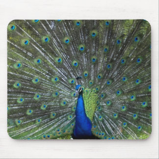 Peacock Strutting Mouse Pad