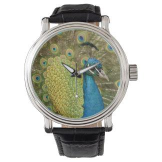 Peacock strutting wristwatch