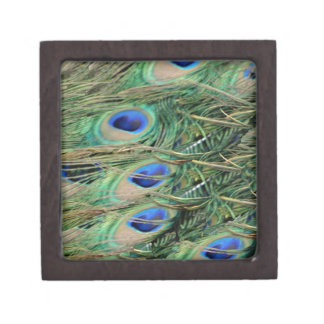 Peacock Tail Feather Blue Eyes With Growth Gift Box